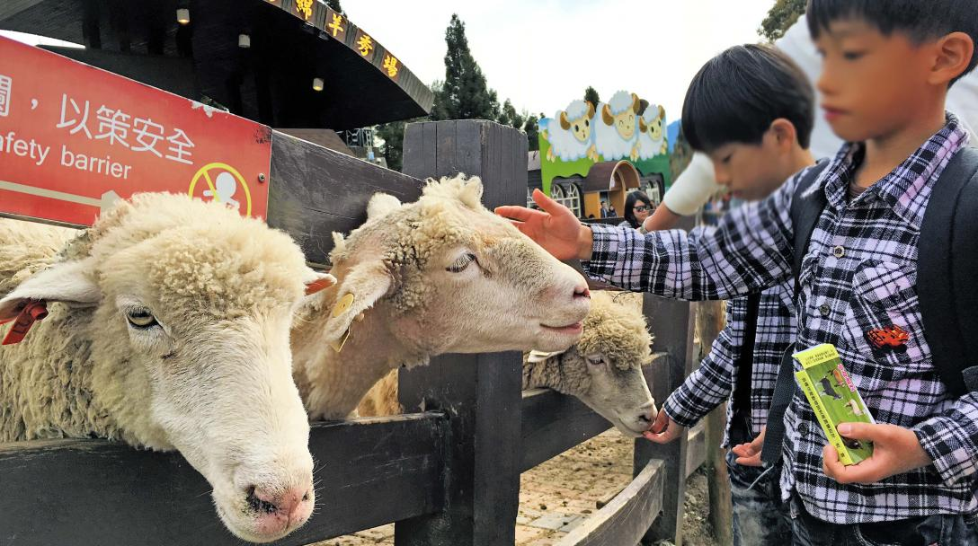 Qingjing Sheep Show Stage (青青草原綿羊秀)