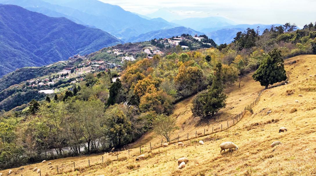 Qingjing Guanshan Pasture (觀山牧區)