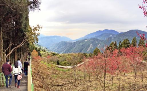 Qingjing 487-Step Trail (清境步步高昇步道, Trail #6)