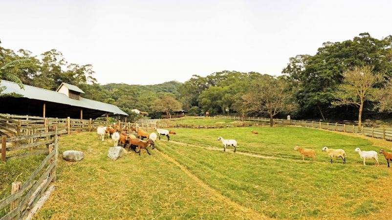 Flying Cow Ranch (飛牛牧場)